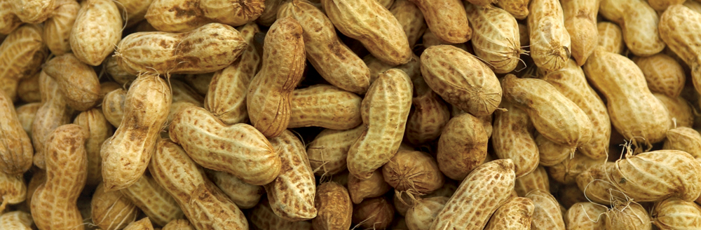 Florida Peanut Producers | Just another WordPress site